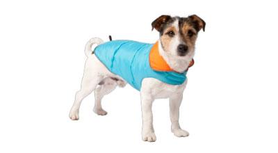 Alle hondenkleding voor je hond