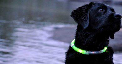 donker hond uitlaten