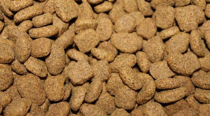 Graanvrij hondenvoer; wat zijn de voordelen?