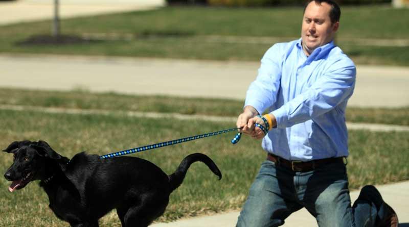 Hoe stop je een hond met trekken tijdens het lopen?