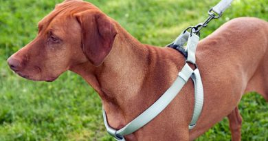 hondentuig voordelen