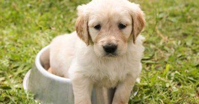 waarom graanvrij hondenvoer