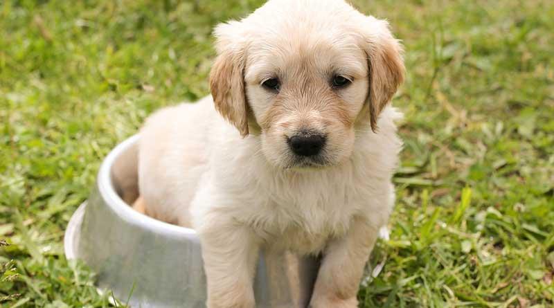 Waar let je op bij nieuwe hondenvoeding?