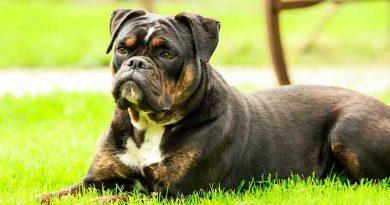 rasvoeding honden
