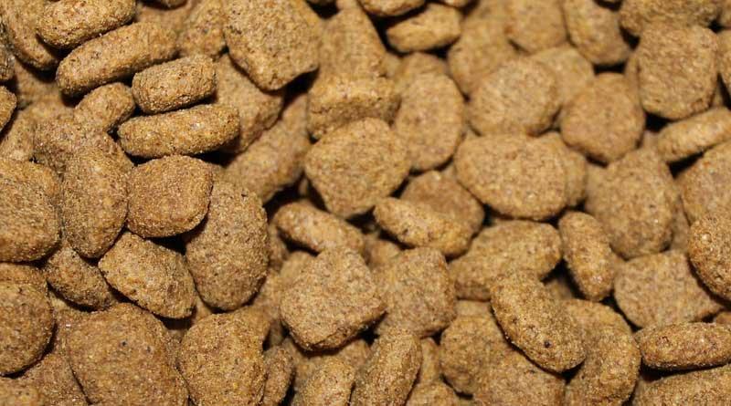 hondenvoer tips - droogvoer