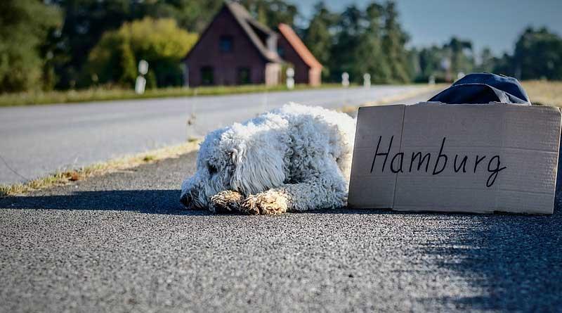 vakantie met je hond voorkom weglopen