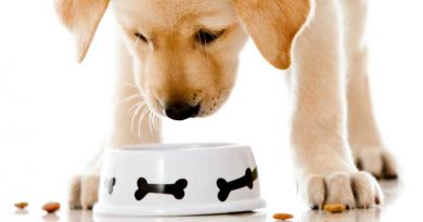 hondenvoer-tips