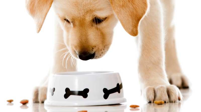 Hondenvoer; tips en suggesties voor goed voer
