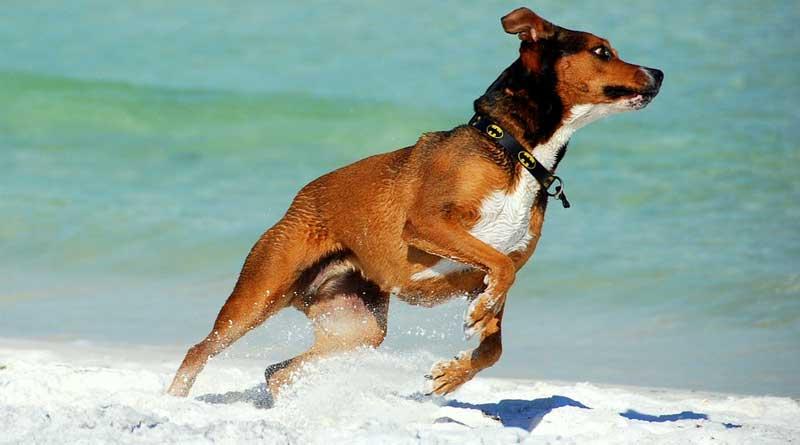 Vakantie met je hond